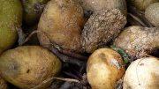 parlamento europeo pide reducir desperdicio alimentario