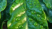 meteorología lluvias Aemet