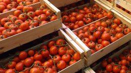 exportación de hortalizas de Almería
