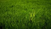 producción agroalimentaria europea