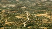 sequía agricultura