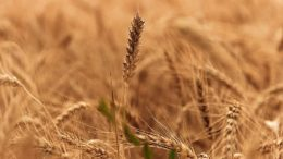Real Decreto para paliar sequía