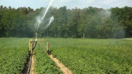 superficie agrícola regadío
