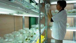 CITA investiga malas hierbas contra herbicidas