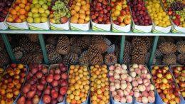 exportaciones hortofrutícolas españolas