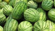 sandía melón