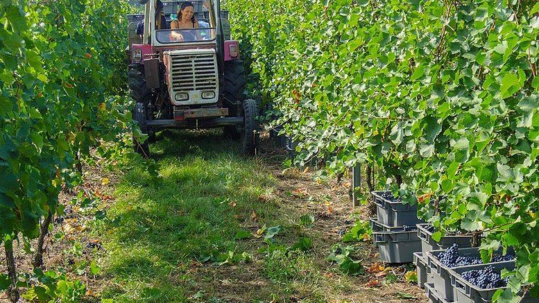 Ley de Titularidad Compartida de las Explotaciones Agrarias