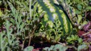 campaña hortofrutícola