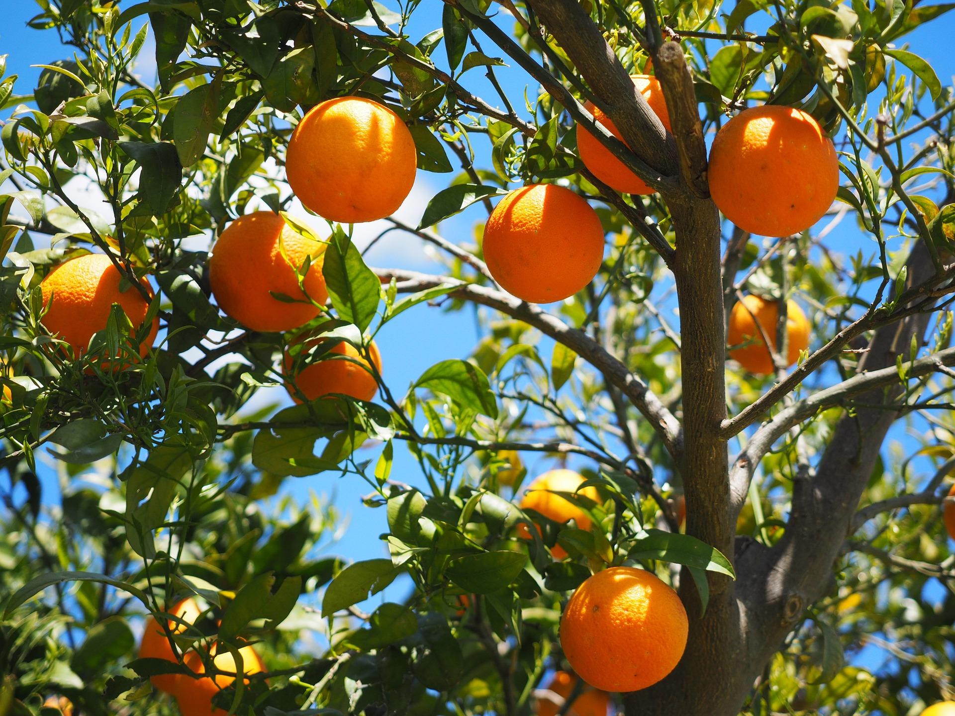 Naranjas Andalucía