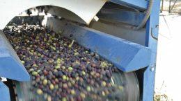 agroindustria olivarera