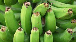 VII Congreso Internacional sobre Banano