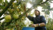 ayudas jóvenes agricultores