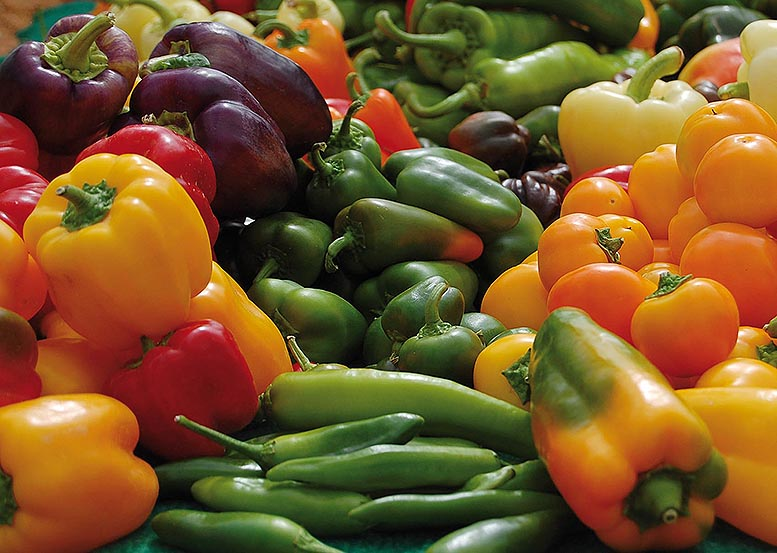 hortalizas hortofrutícola