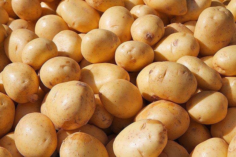 importación frutas hortalizas