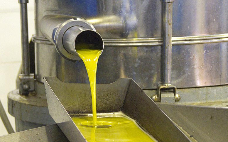 sector oleícola