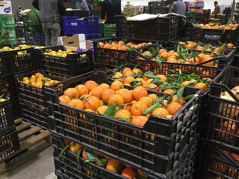 mandarinas en la Cabalgata de Reyes