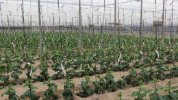 modernización de invernaderos