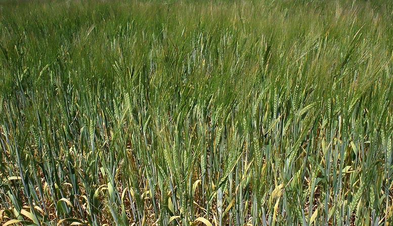 préstamos agrícolas