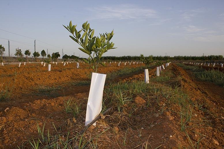 modernización de explotaciones agrarias