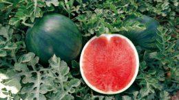 melón y sandía
