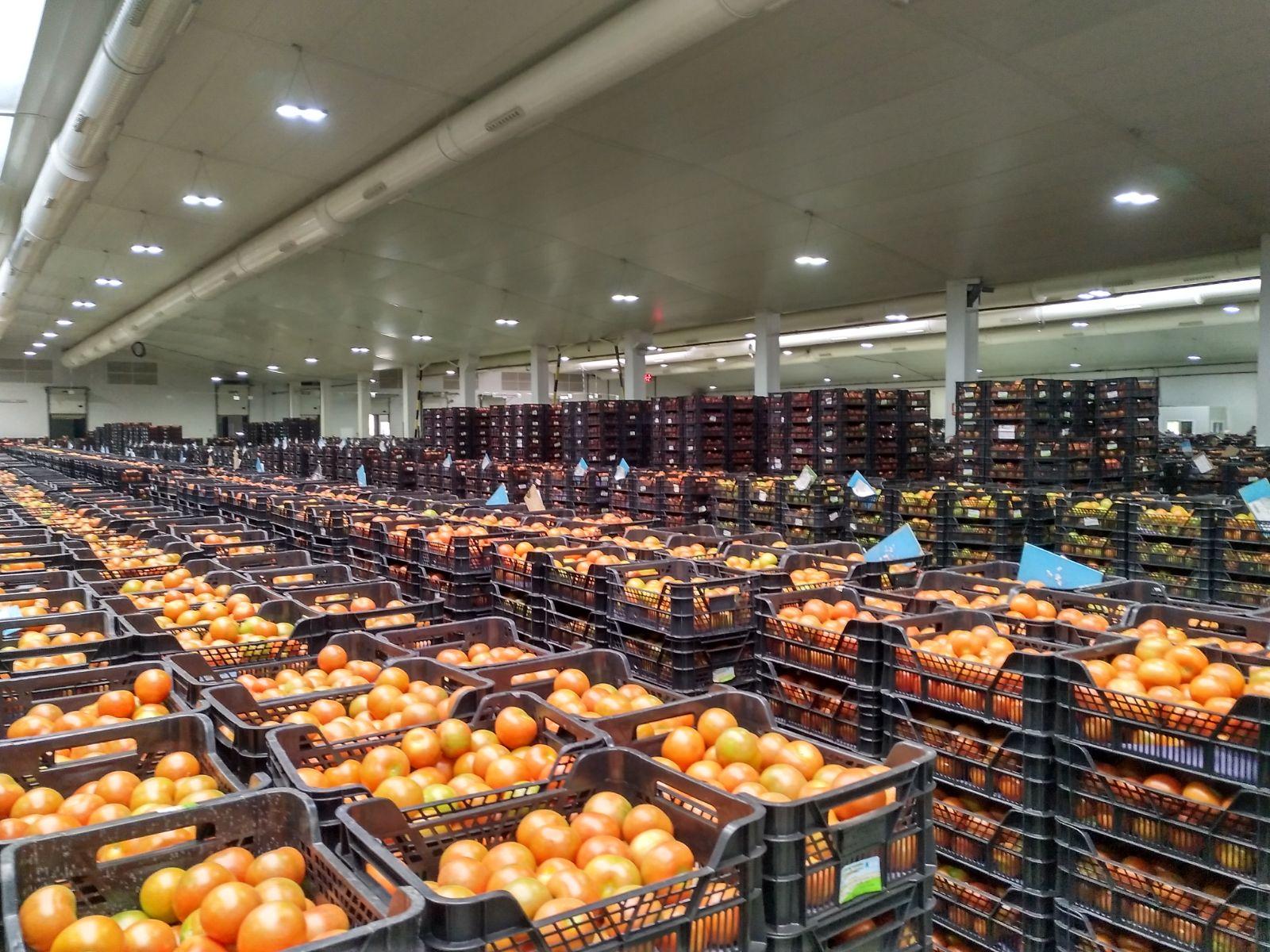 Instalaciones tomate