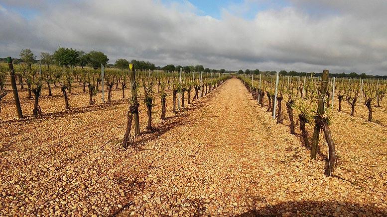 granizadas viñedo