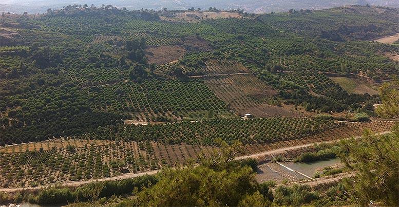 limones turcos