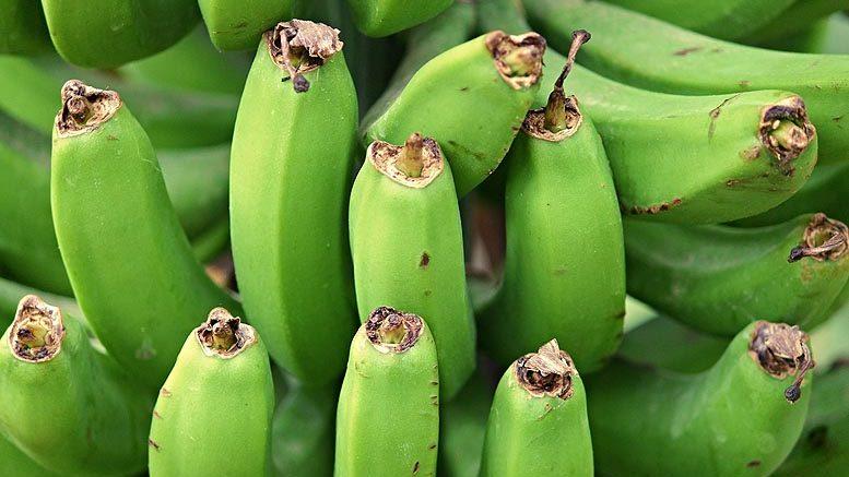 plátano canario