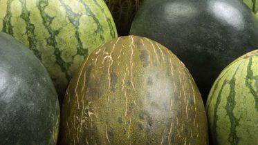 lonja melón 2018