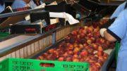 integración de cooperativas agroalimentarias