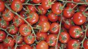 producciones hortícolas de Andalucía