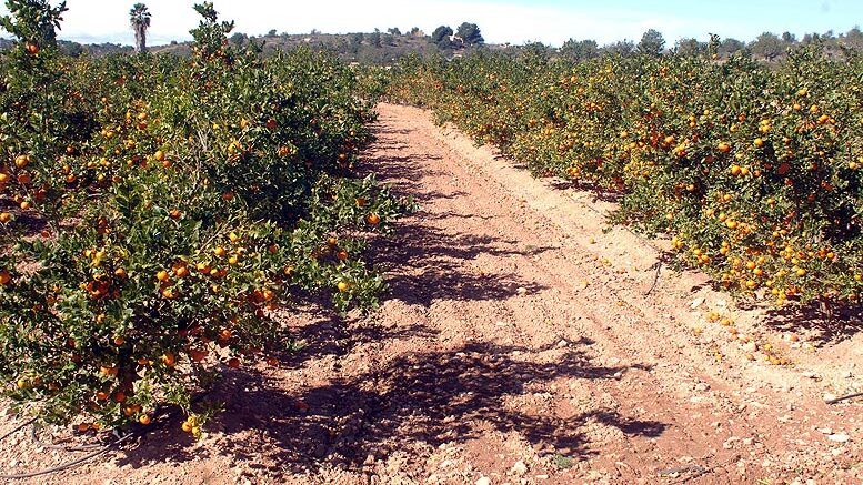 citricultura valenciana