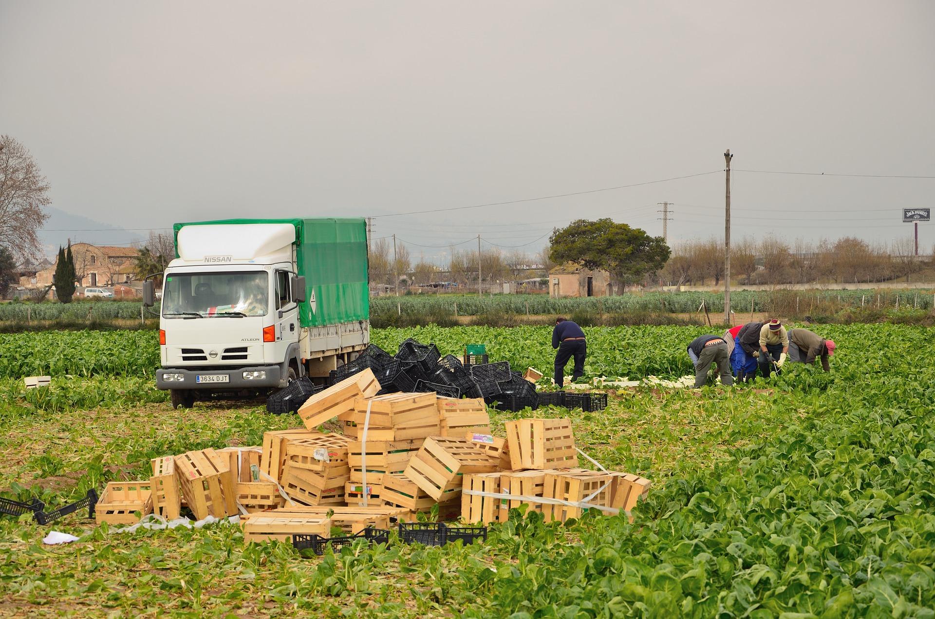Trabajador Agricultor Desempleo