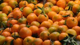 observatorio de frutas y hortalizas
