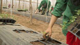 trabajadora campesina agricultora