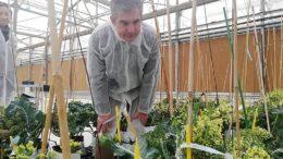 mejora genética de semillas