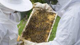 apicultura abejas