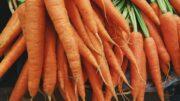 ecológica hortalizas