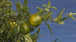 módulos agrícolas
