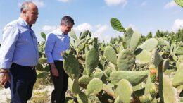 diversidad de cultivos Murciaa
