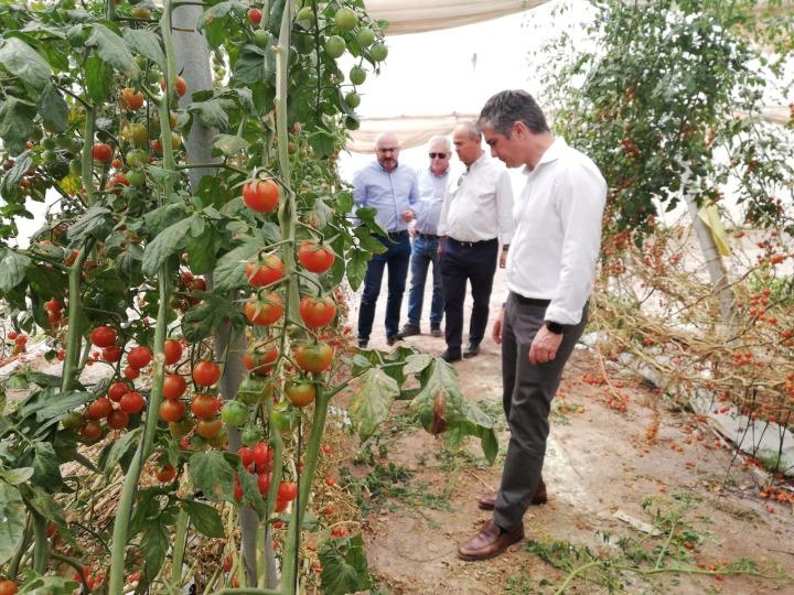 Murcia tomate