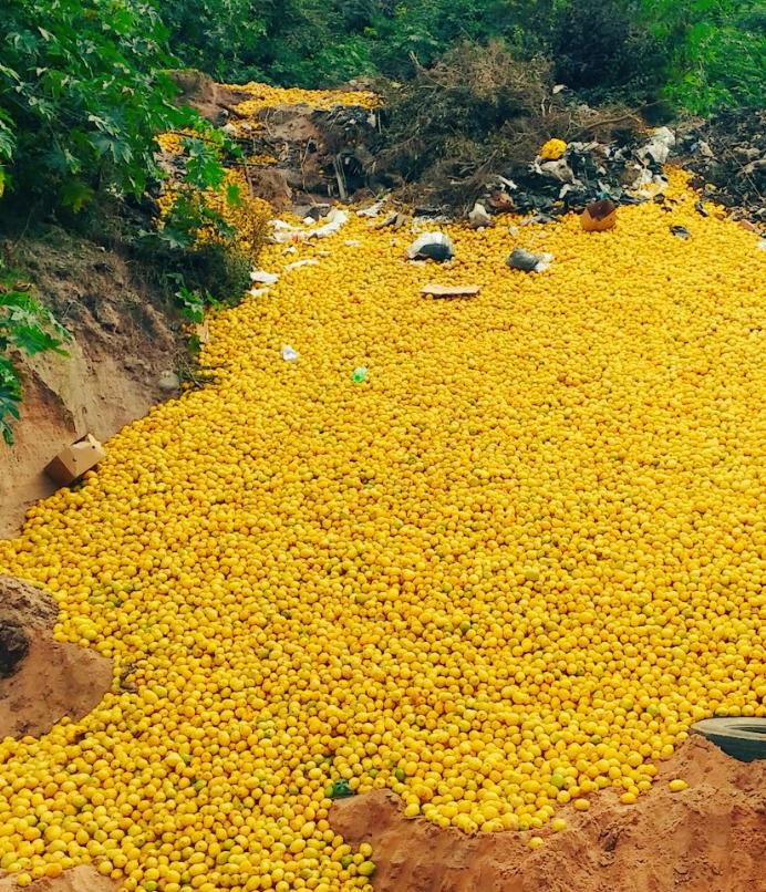 Tiran limones en Tucumán