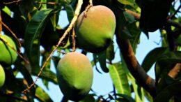 subtropicales árbol