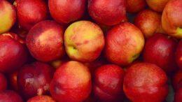 importación de frutas chinas