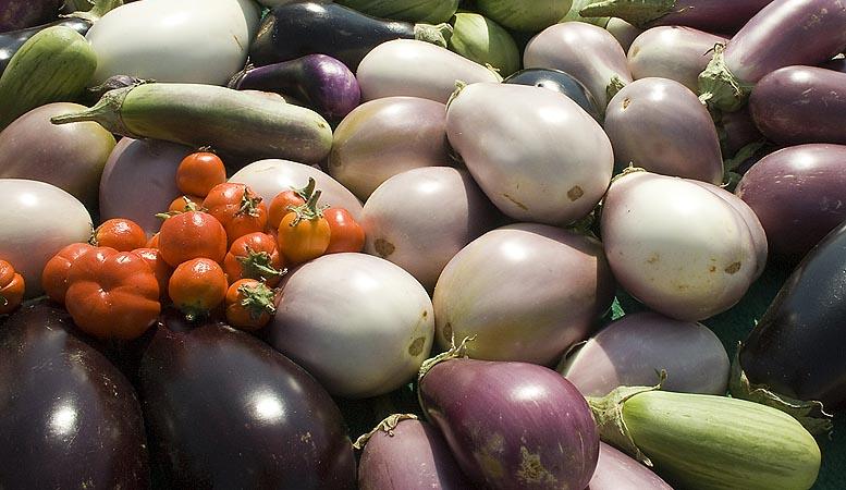 ayudas para productores hortofrutícolas