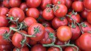 tomate mexicano
