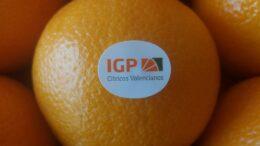 Comercialización cítricos IGP