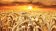 cultivos de secano