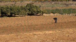 paro agrícola