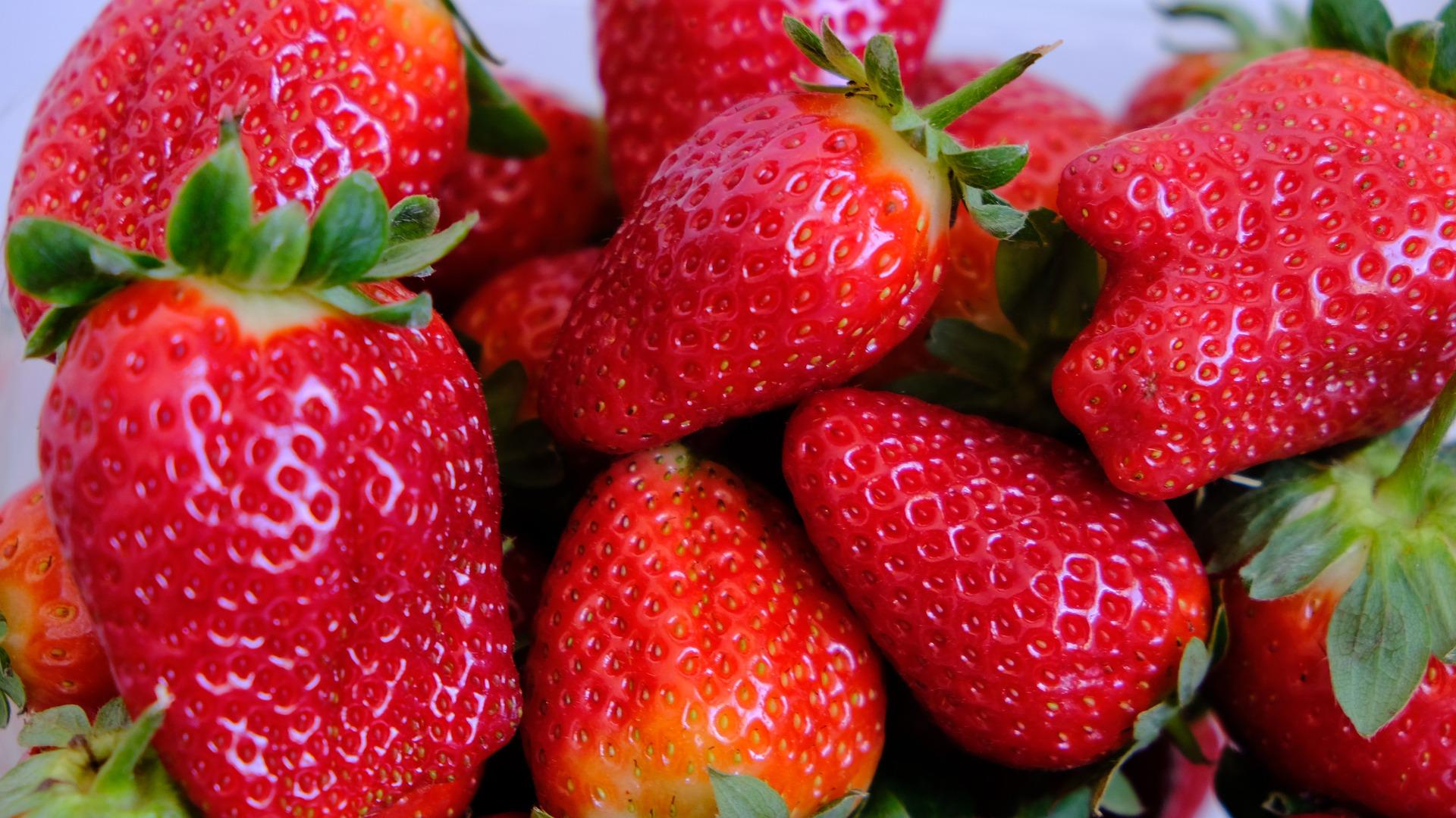 fresón berries